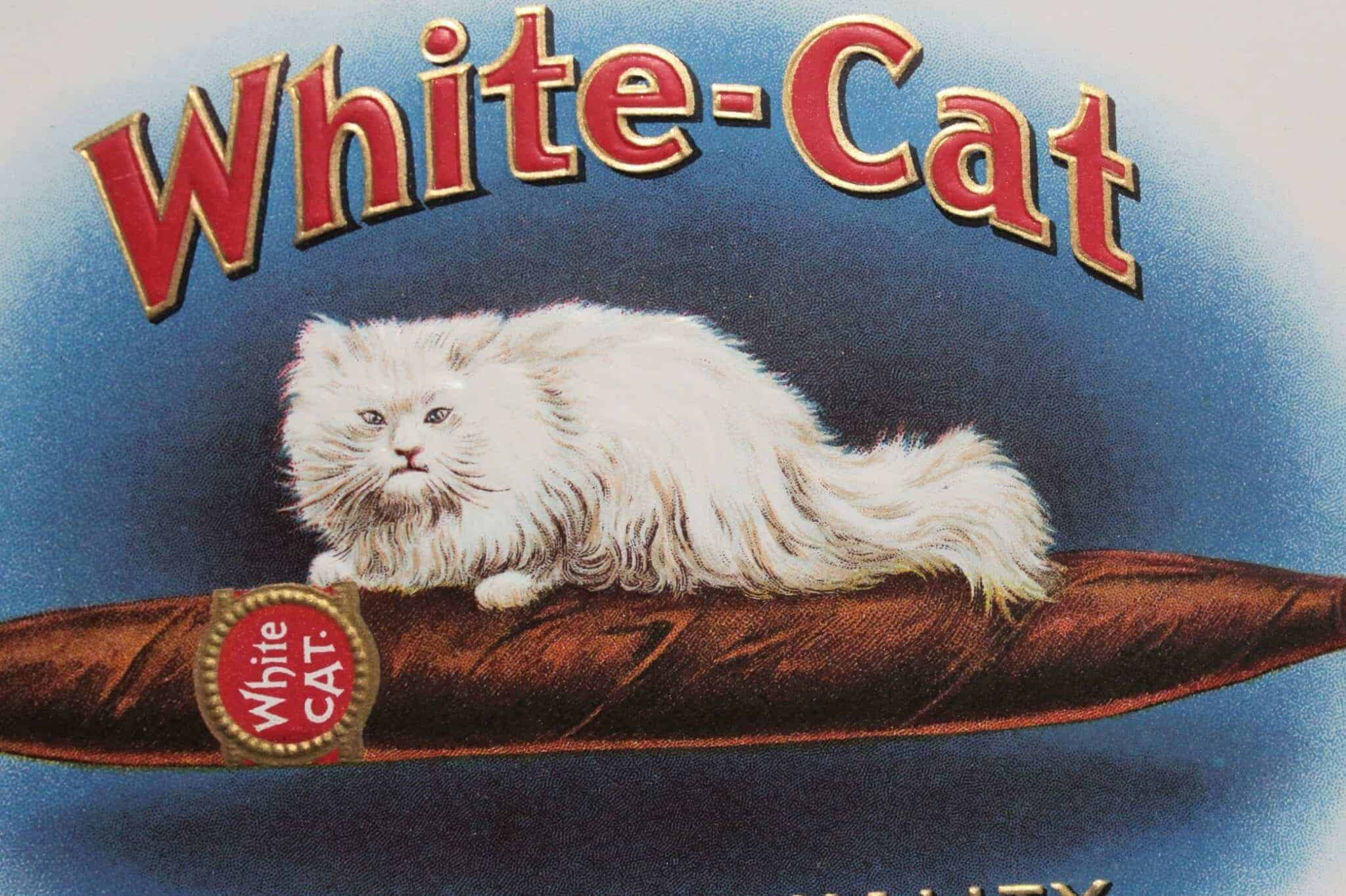 Label Cigar Box White Cat Cigars Original Lithograph 1920 S Nos Antique Antigo Trunk