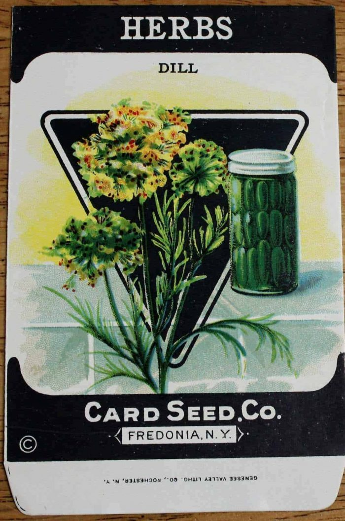 Seed Packets, Vinca/Periwinkle #784 by Lone Star Seed Co. 1950's NOS