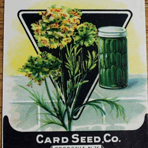 Seed Packets, Herbs, Dill from Card Seed Co. 1920's, Unused, Original